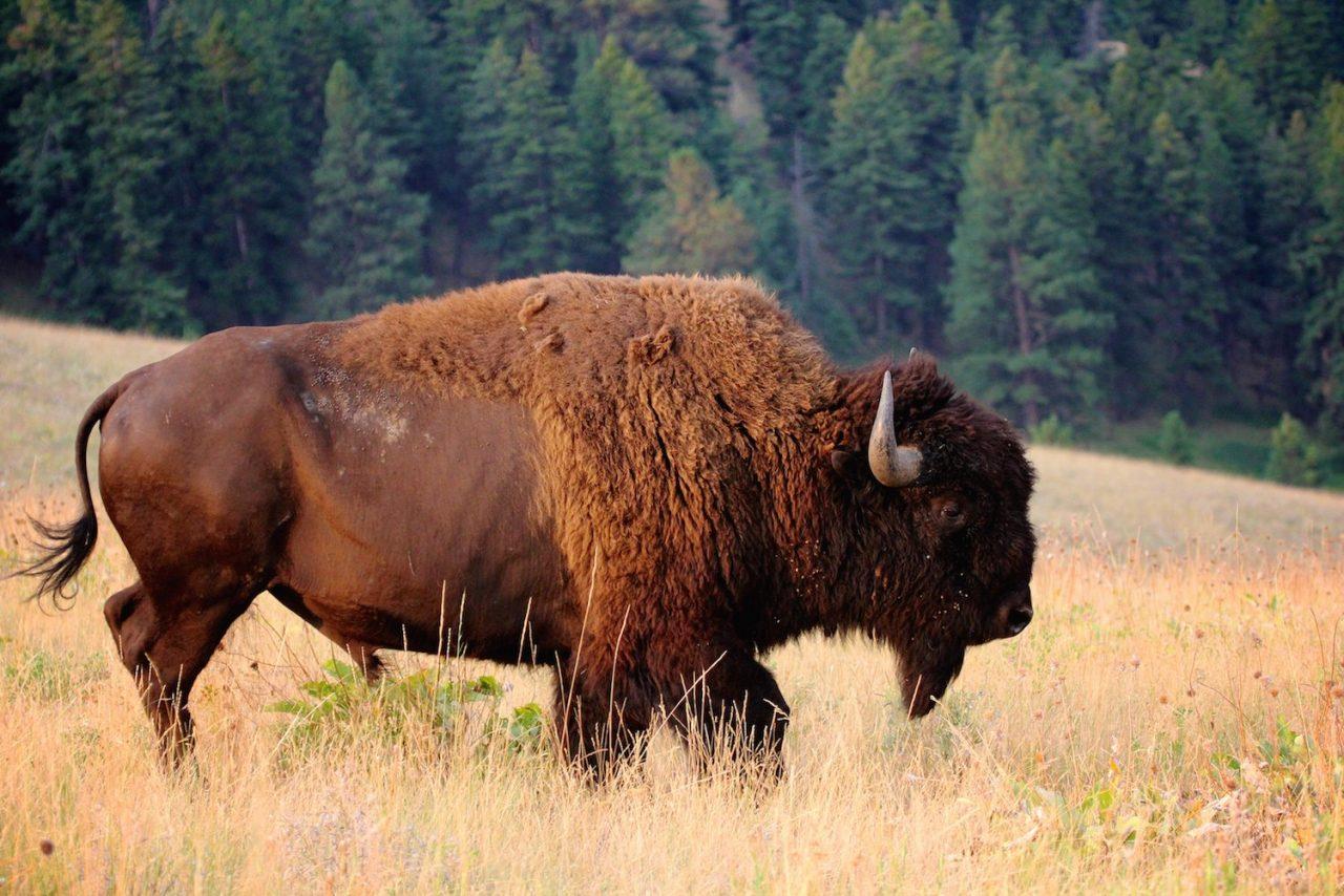 Montana Big Sky Road Trip Drive The Nation