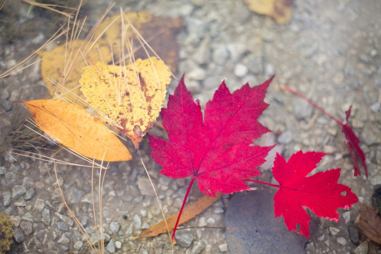 10 Best National Parks for Fall Leaves