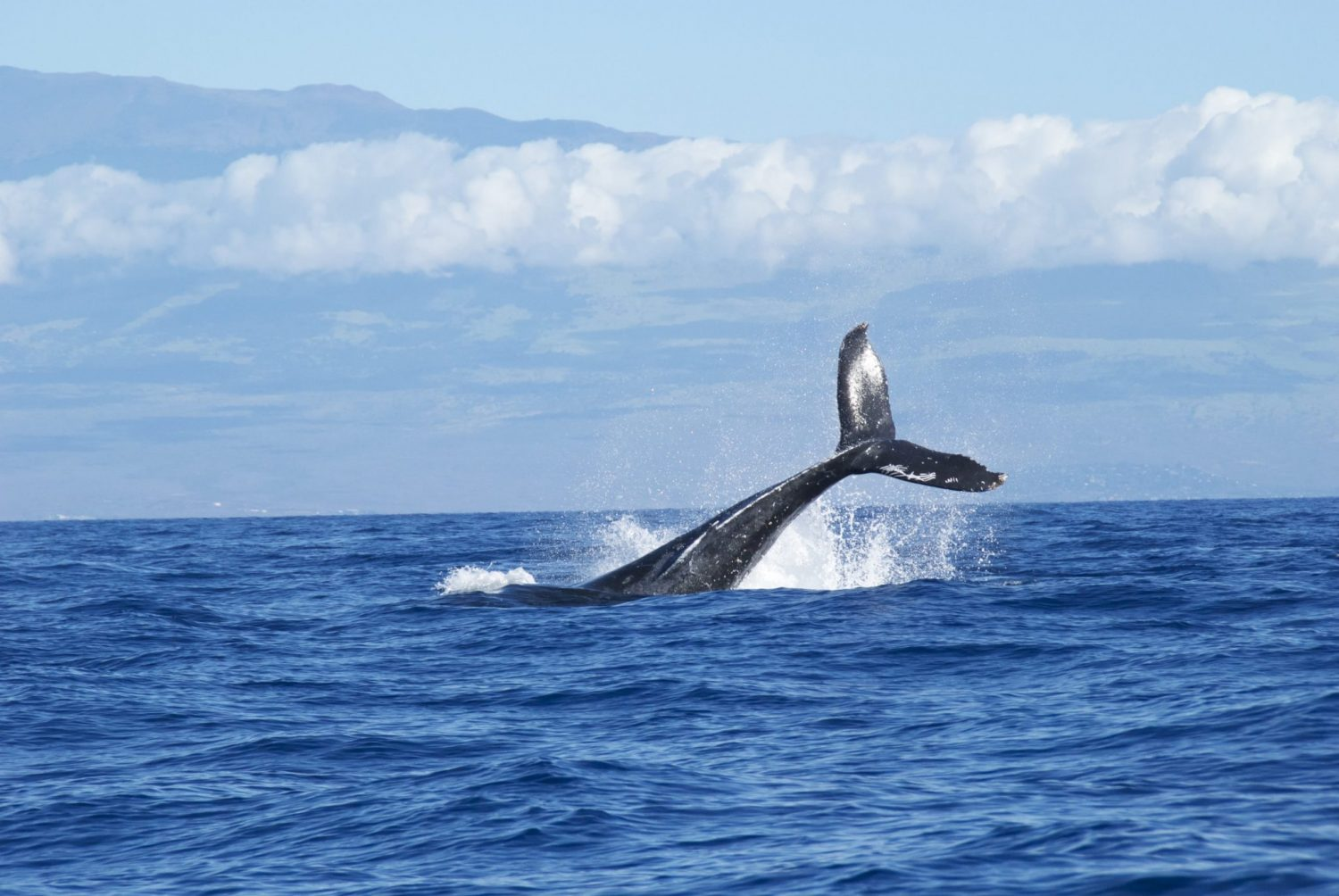 Best Travel Binoculars For Whale Watching