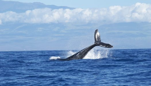 Top Destinations for Whale-Watching Tours