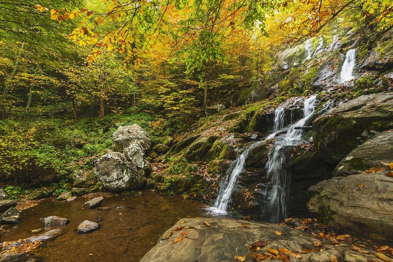 fall leaves shenandoah national park