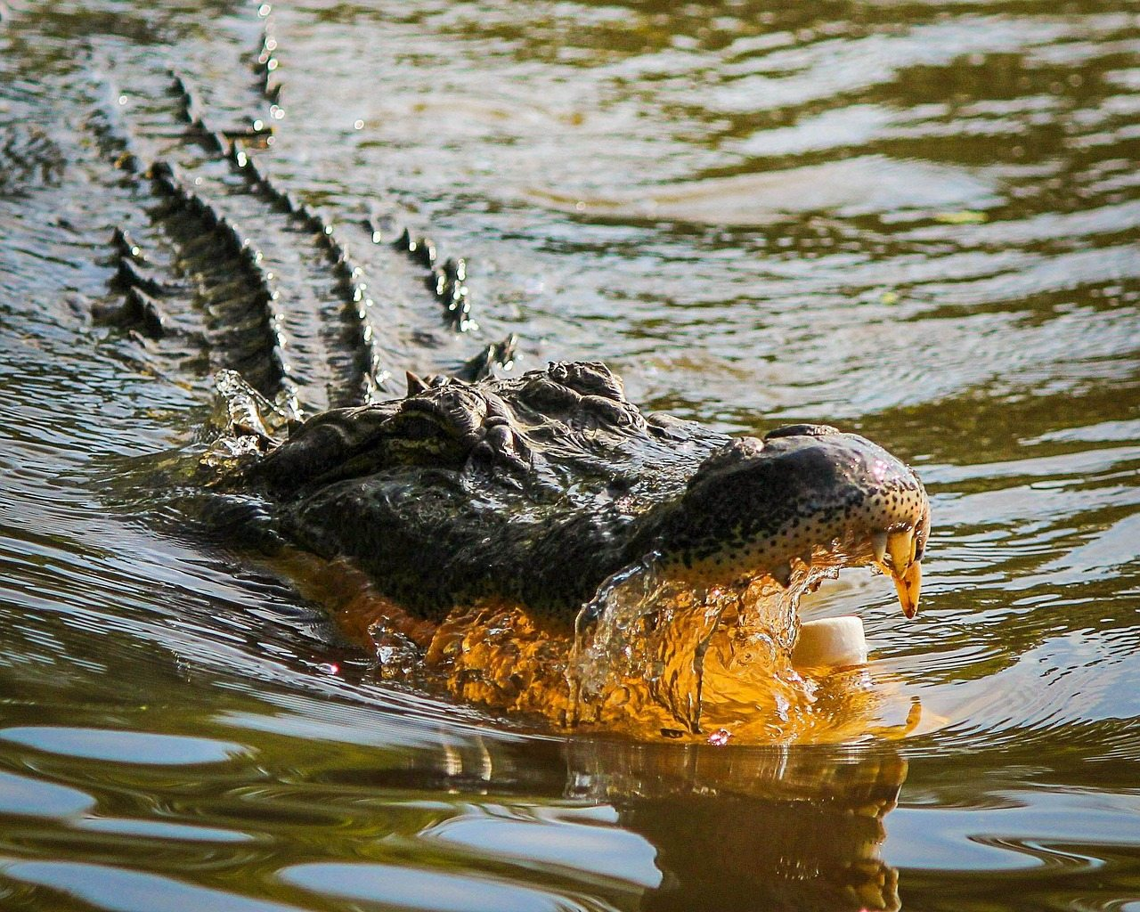 guide to gatorland orlando
