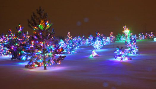 Hemi Lighted Forest of Hope