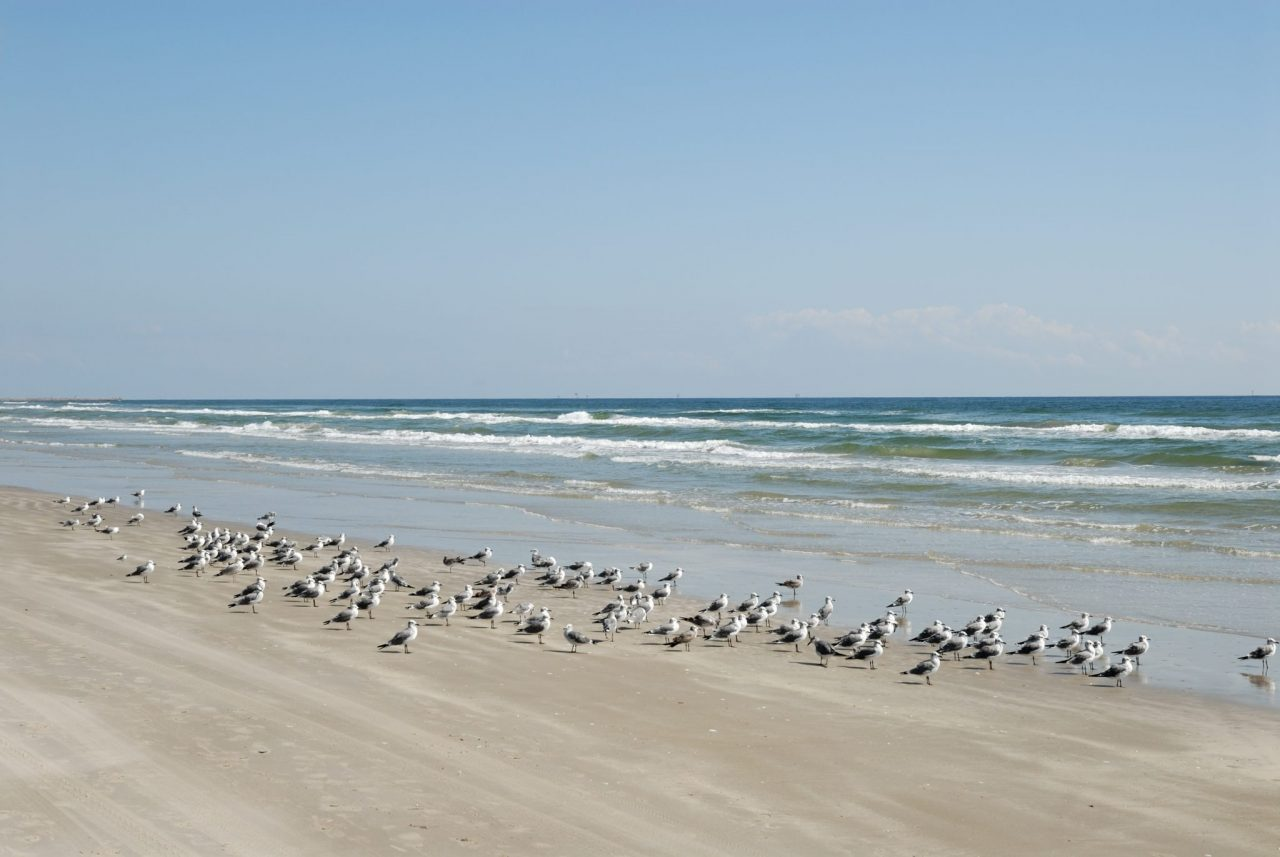 Seagulls on the beach of Padre Island south Texas USA