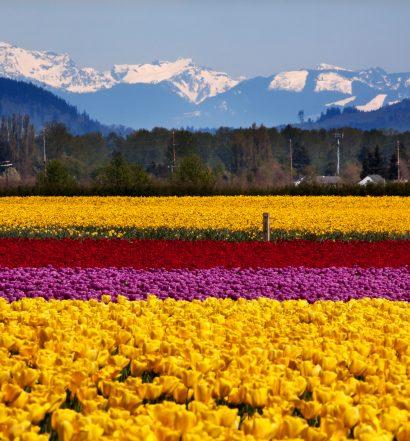 Skagit Valley Farm Washington State