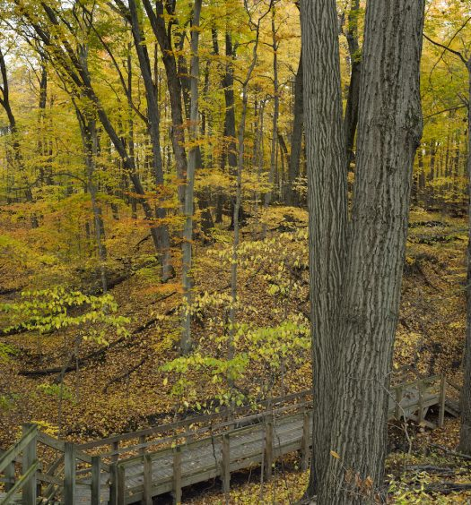 Autumn arrives in the deep forest of the Indiana Dunes SP.