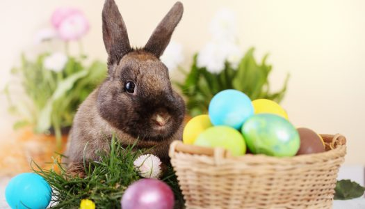 The World's Largest Easter Egg Hunt