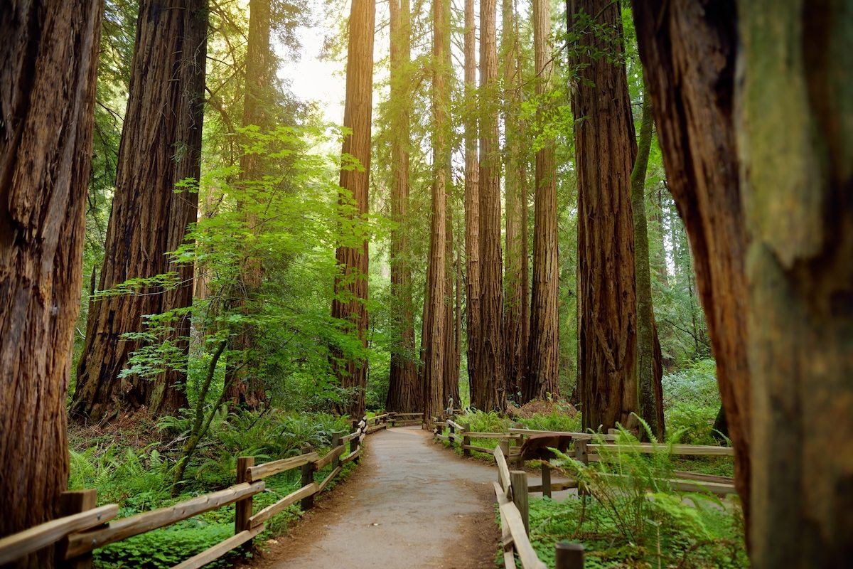 Golden Gate National Recreation Area: Muir Woods