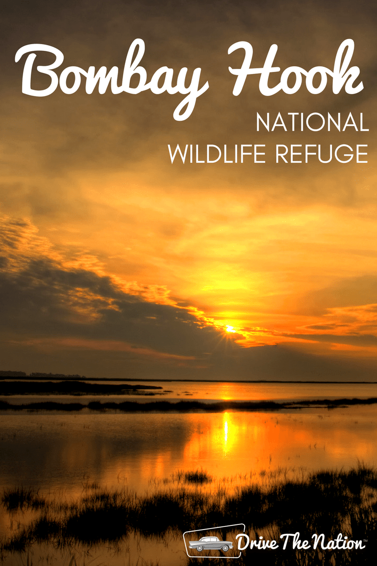 Enjoy the breathtaking sunsets and active wildlife of Bombay Hook Wildlife Refuge in Delaware
