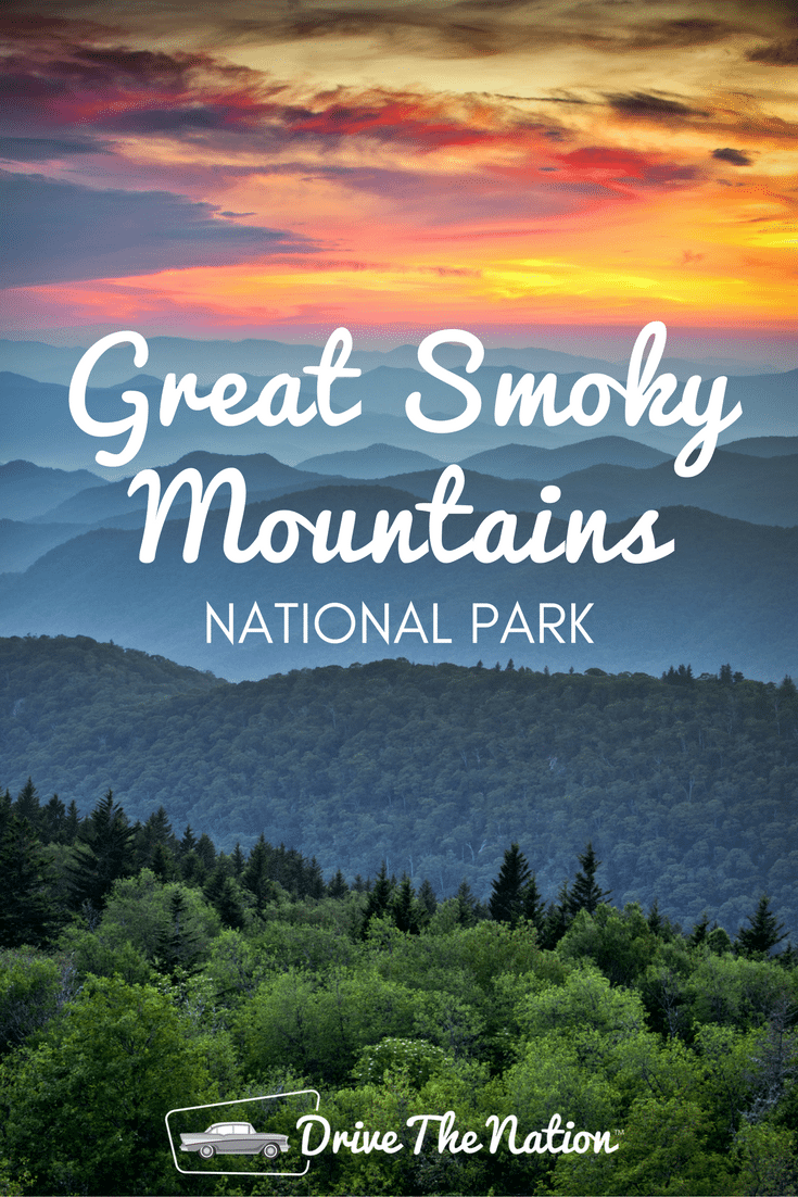 From scenic drives to beautiful nature and hiking trails, Great Smoky Mountains National Park is also home to over 1,400 bears!