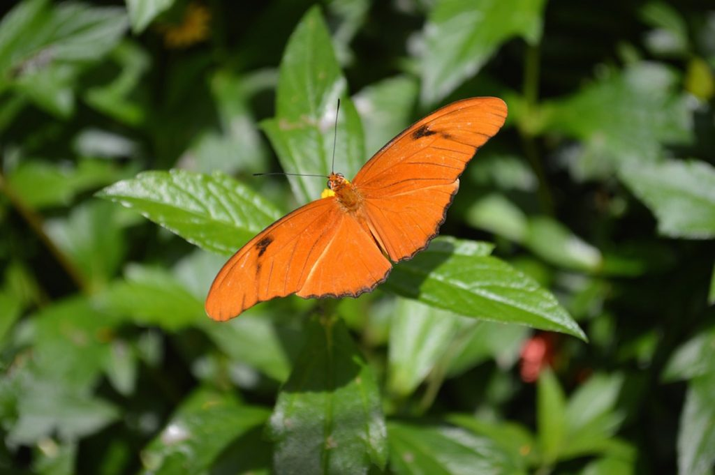 Butterfly & Nature Conservancy, Key West, Florida