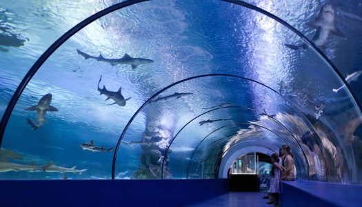 Summer of Sightseeing – Aquariums