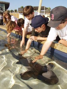 Pet Sharks at the Aquarium of the Pacific