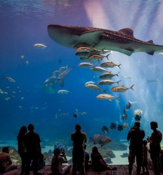 Interior Of Georgia Aquarium With The People
