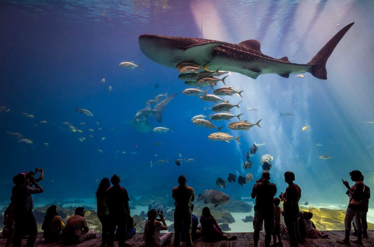 5 Best Aquariums to See Sharks | Drive The Nation
