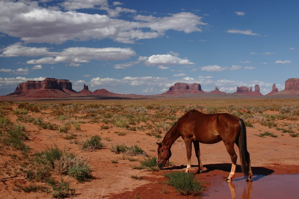 a brown horse sipping water from a puddle in the middle of the sunny dessert in Monument Valley, Utah