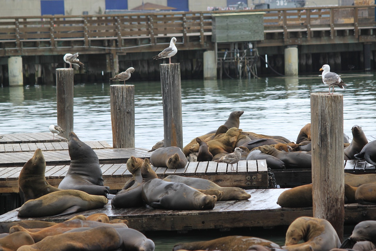 Places to See Sea Lions in San Francisco