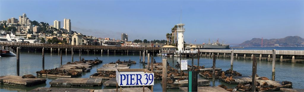 Sea Lions scattered all over the dock on Pier 39 in San Francisco