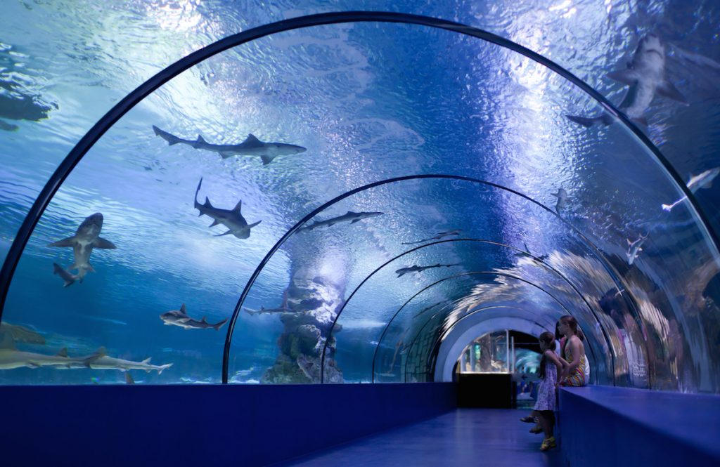 Shark tunnel inside of an Aquarium