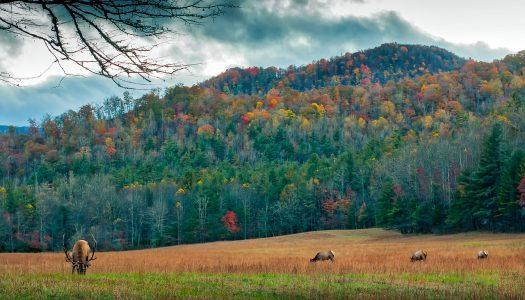 Charming Small Towns in North Carolina