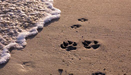 Best Dog Beaches in California