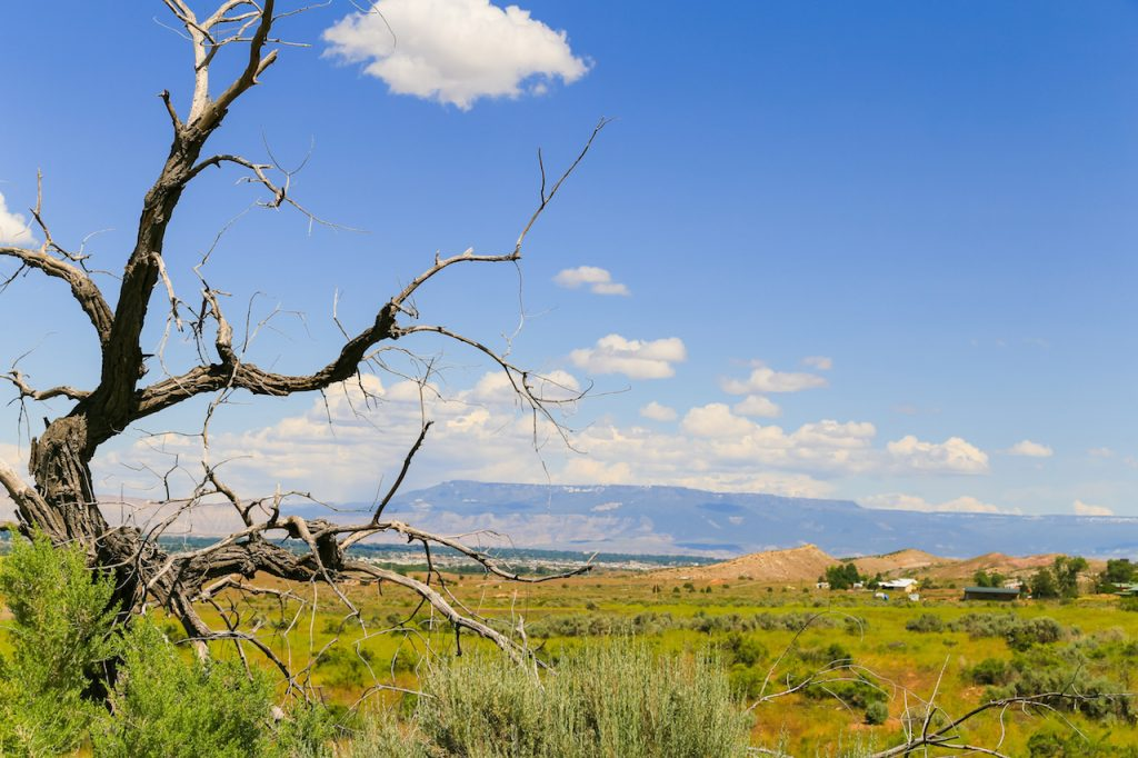 Distant view of the city of Grand Junction in Colorado with a dead tree in front and the Grand Mesa in the back.