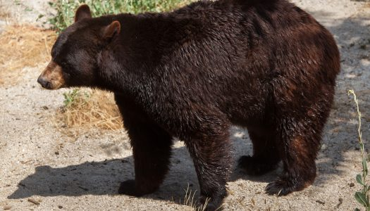 All About Oswald's Bear Ranch in Newberry, Michigan
